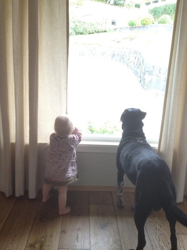 Hva ser vi på?