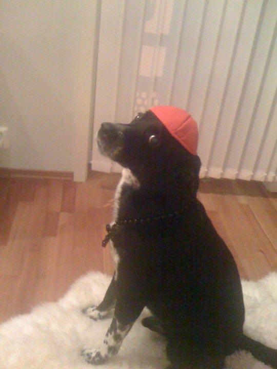 Cardinalhund