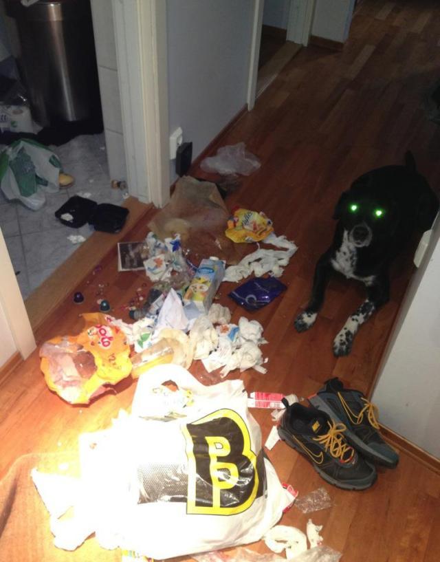 Søppelhund